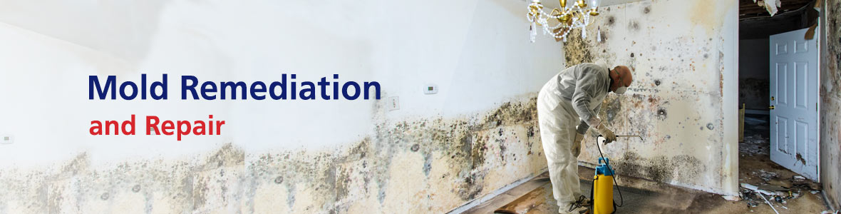 Mold Remediation and Repair in Charlotte, NC, Hickory, NC, and York, SC